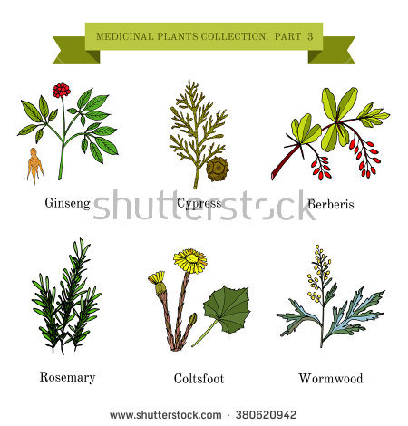 Collection Cooking Herbs Spices Isolated On Stock Photo 293366462.