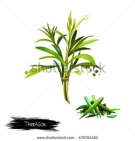 """white Artemisia"""" Stock Photos, Royalty."""