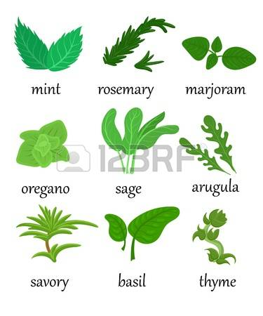 Aromatic Plants Images & Stock Pictures. Royalty Free Aromatic.