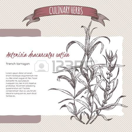 53 Artemisia Stock Vector Illustration And Royalty Free Artemisia.