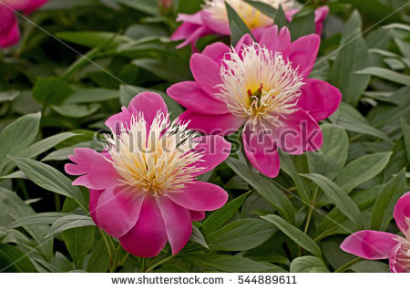 Herbaceous Stock Images, Royalty.