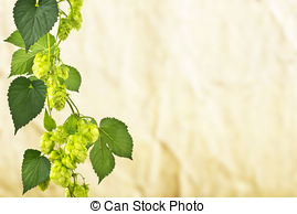 Stock Photo of Herbaceous plants are annual, biennial and.