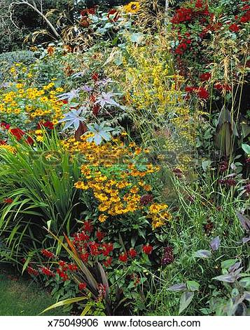 Stock Images of Hot herbaceous border, Late summer x75049906.