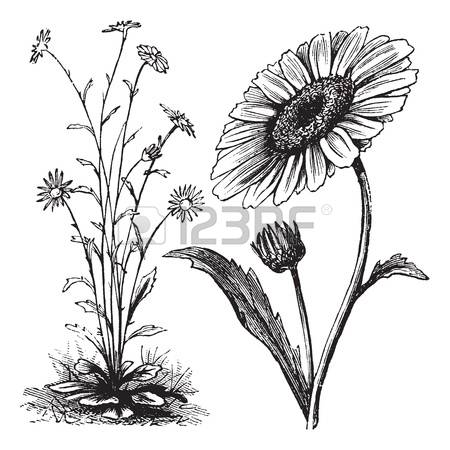 892 Herbaceous Stock Vector Illustration And Royalty Free.