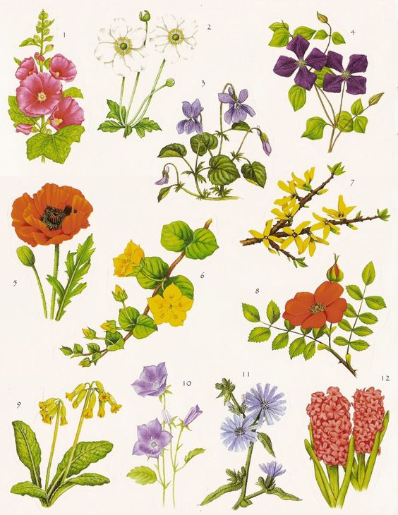 Flower Meanings: Language of Flowers.