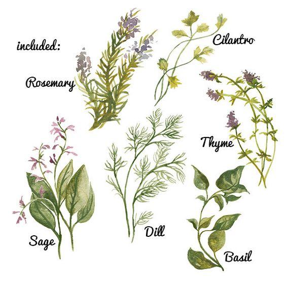 Aquarell Kraut Pflanze Blume ClipArt für Scrapbooking sofortige.