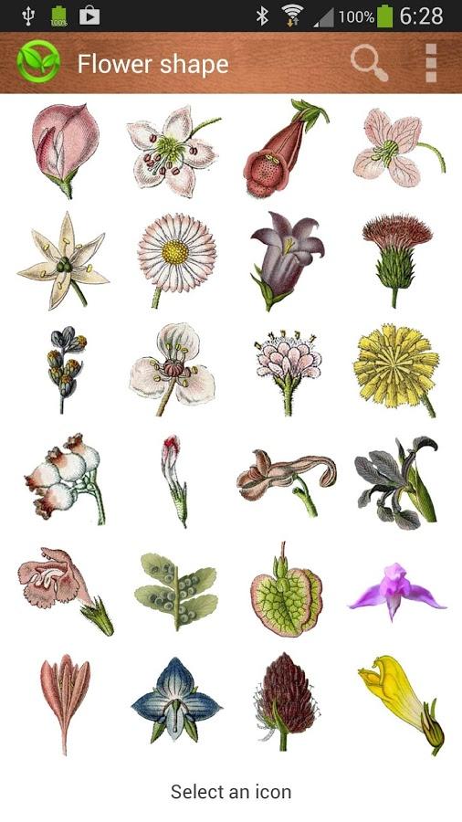 Botaniculum.