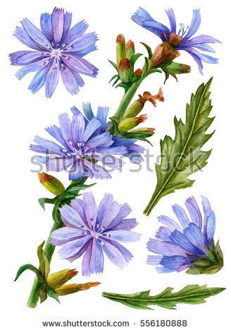 Blue Flowers Pattern Seamless Clip Art Stockillustration 384019567.