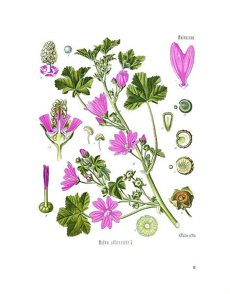 1000+ images about draw flowers on Pinterest.