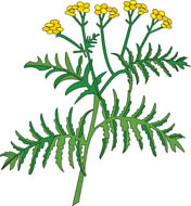 Free Herbs Clipart.