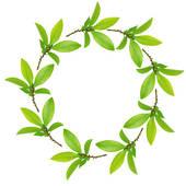 Stock Illustration of Herb Leaf Selection k2200257.