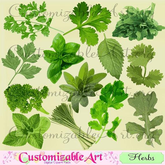 Herb Clipart Digital Herbs Clip Art Arugula Basil Cilantro.