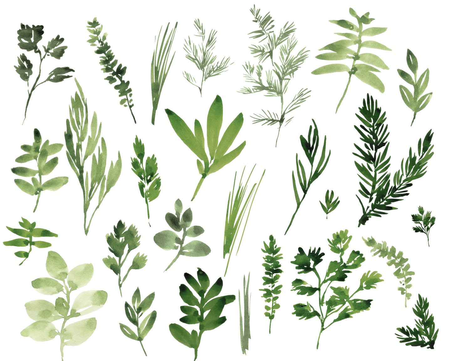Digital Clipart, Watercolor Herbs, Hand Painted Leaves Basil, Sage.