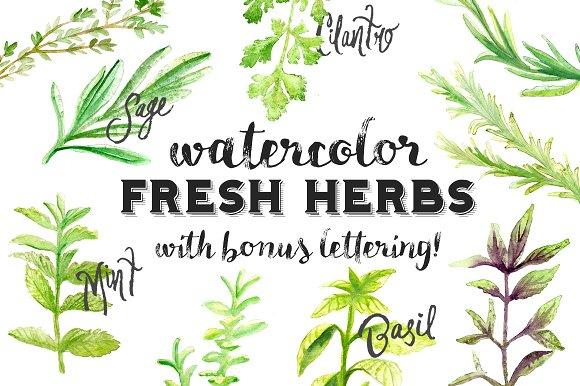 Watercolor Fresh Herbs Clipart Set ~ Illustrations on Creative Market.