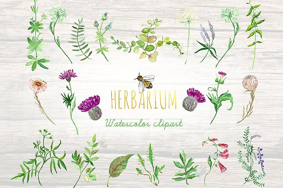 Forest herbs, leaves foliage clipart ~ Illustrations on Creative.