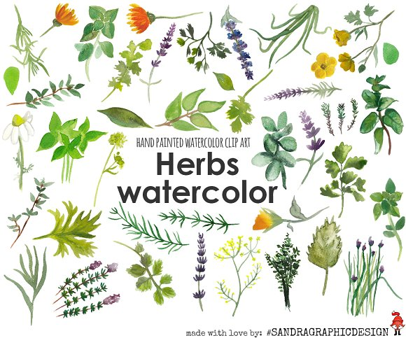 Herbs watercolor clip art ~ Illustrations on Creative Market.