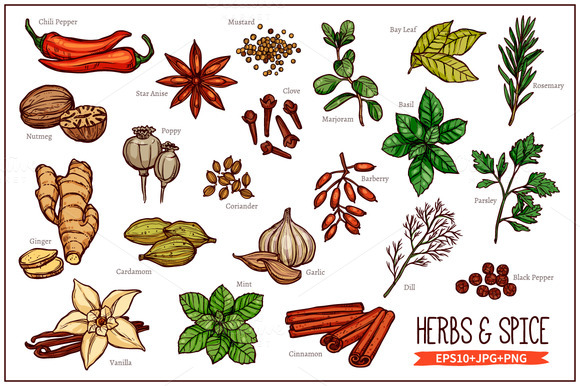 Sketch Herbs And Spice by alexrockheart on Creative Market.