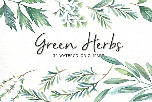 Green Herbs Watercolor clipart ~ Illustrations on Creative Market.