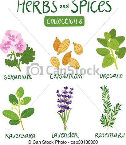 Clip Art Vector of Herbs and spices collection 8. For essential.