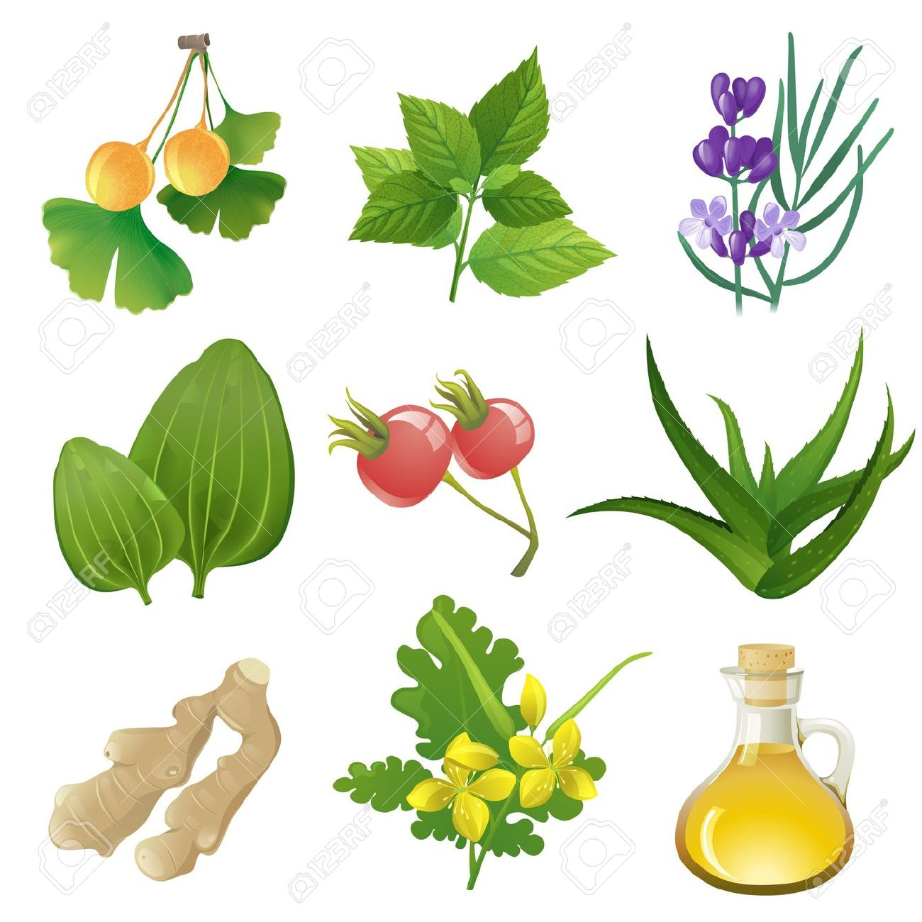 Plants Icons For Herbal Medicine Royalty Free Cliparts, Vectors.