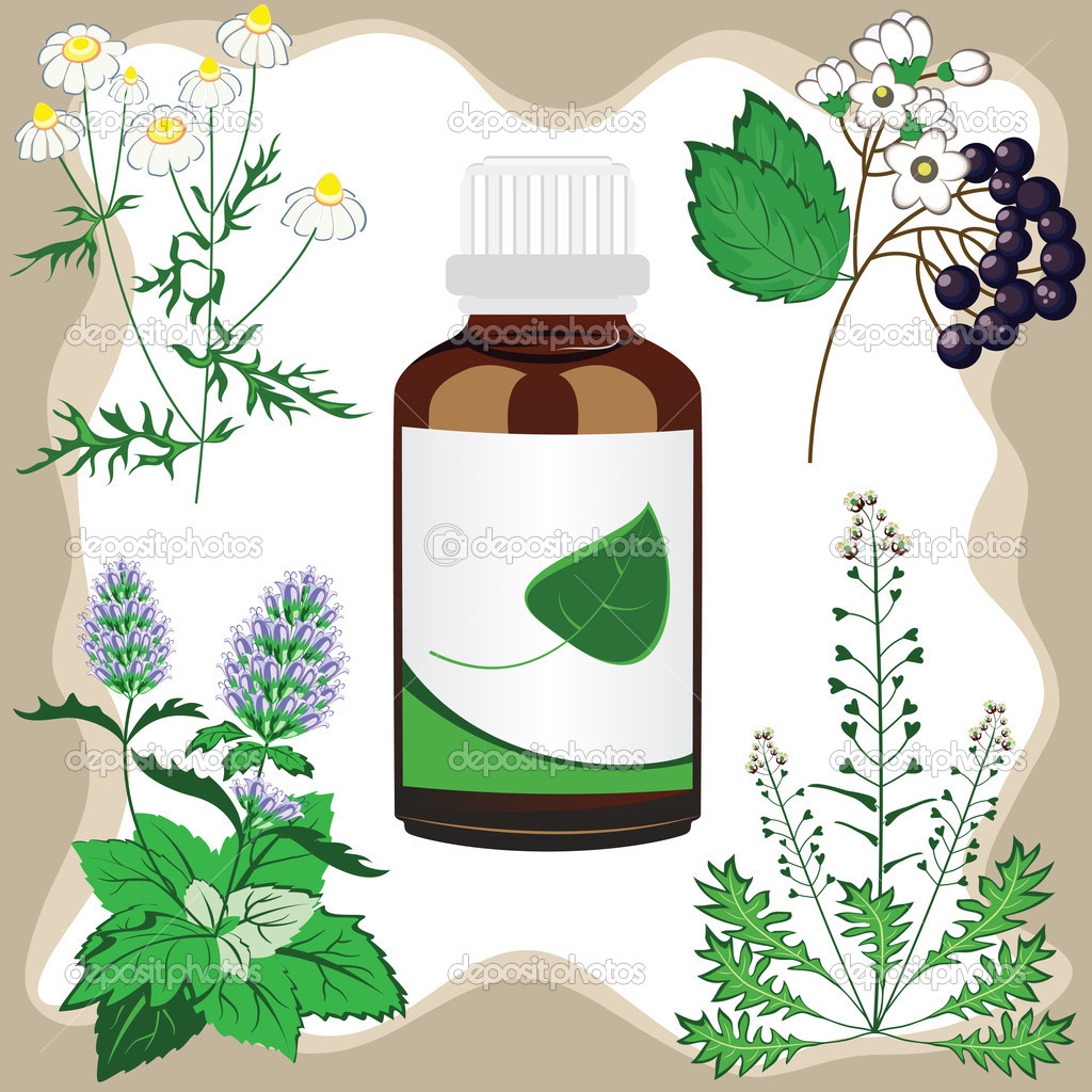 Medicinal herbs with bottle, vector illustration — Stock Vector.