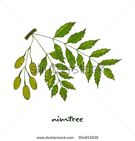Neem Leaves Stock Images, Royalty.
