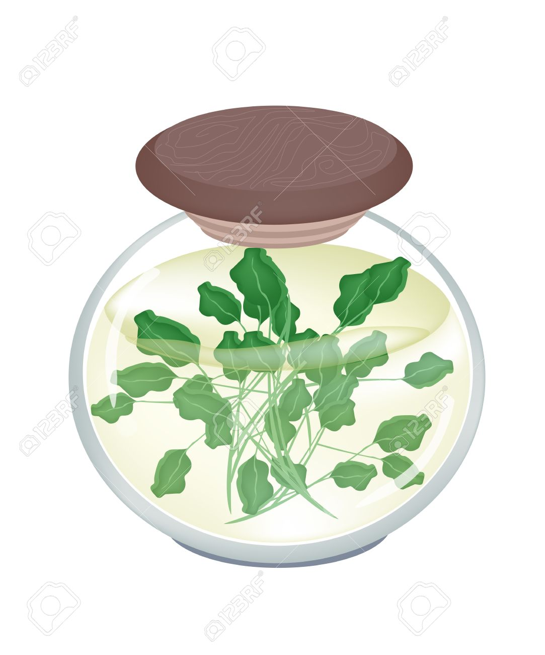 Vegetable And Herb, An Illustration Of Pickled Watercress Or.
