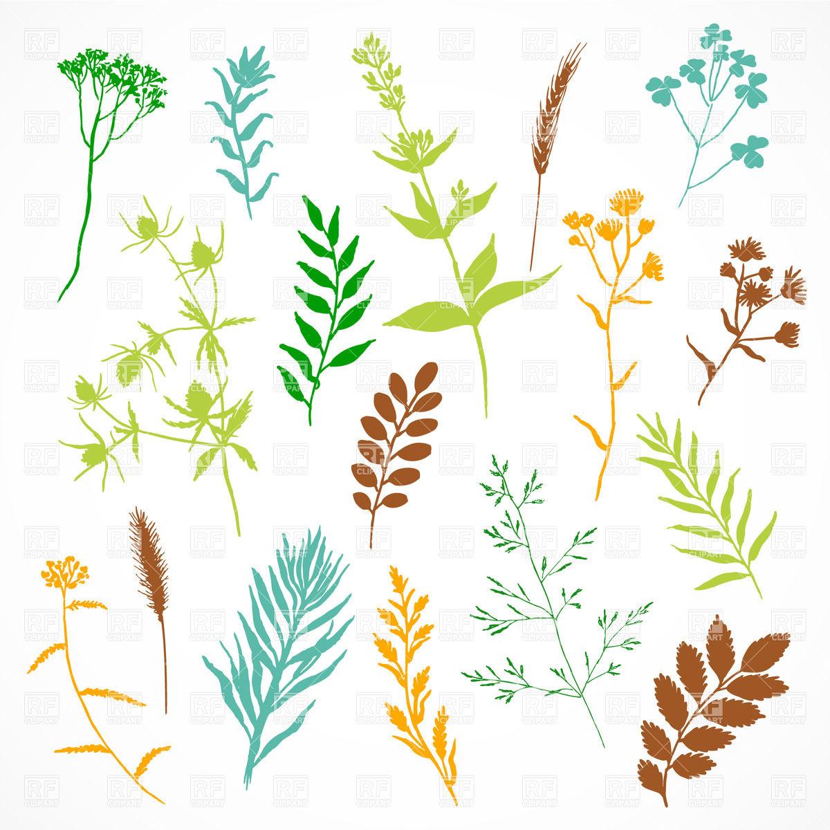 Herbarium.