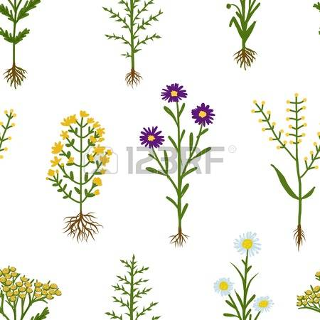 2,681 Herbarium Cliparts, Stock Vector And Royalty Free Herbarium.