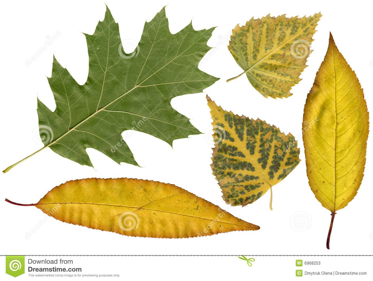 Autumn Herbarium Stock Photos.