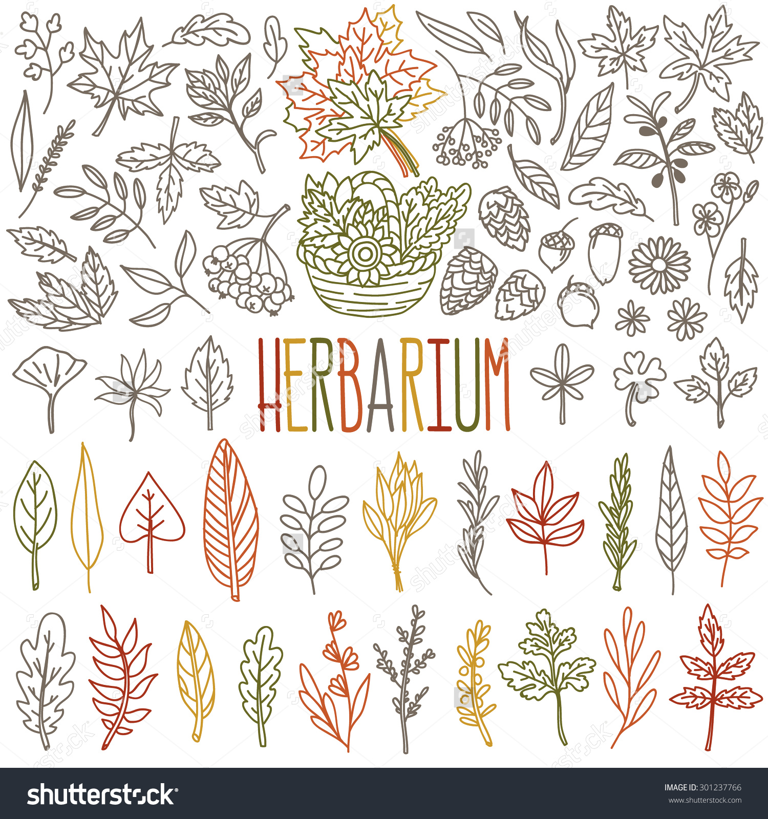 Herbarium Different Types Shapes Autumn Leafs Stock Vector.