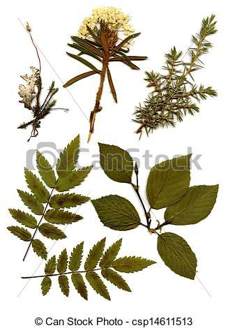 Stock Photography of Herbarium. csp14611513.