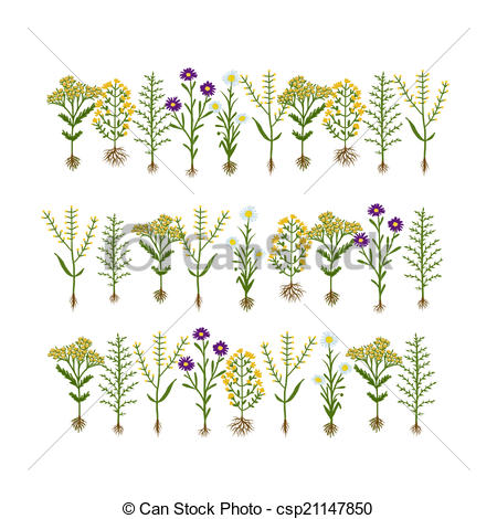 Clipart Vector of Herbarium flowers with roots, sketch for your.