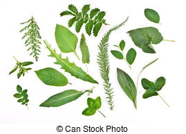 Stock Image of Herbarium.