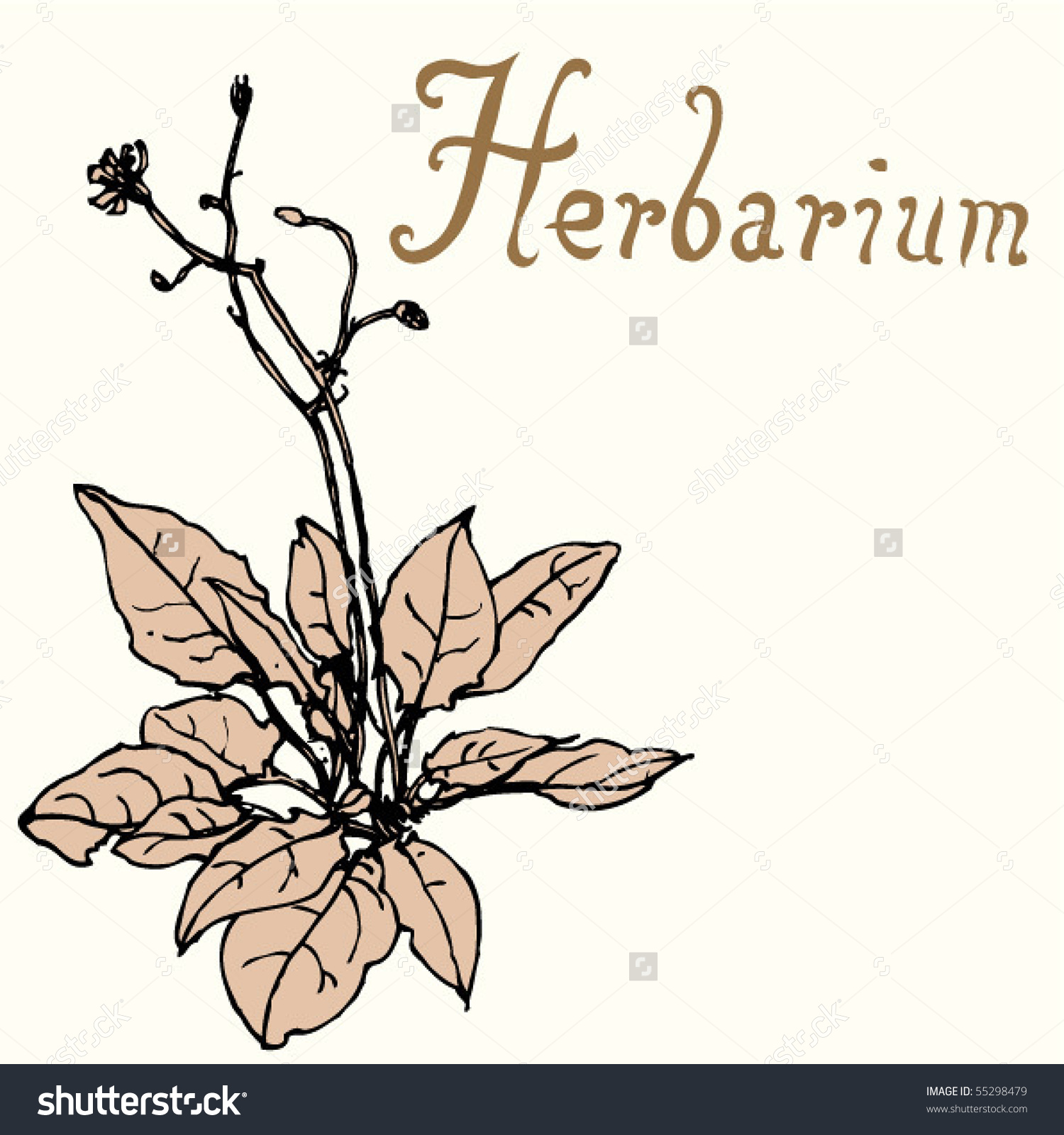 Herbarium Stock Vector 55298479.