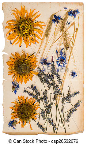 Picture of dried flowers on aged paper sheet. herbarium of.