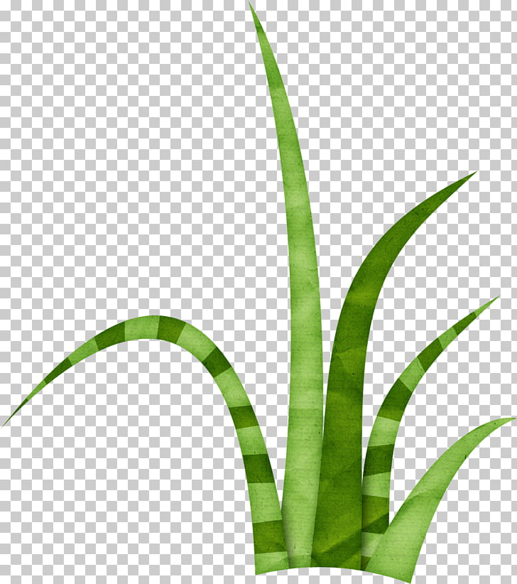Lawn , herbe PNG clipart.