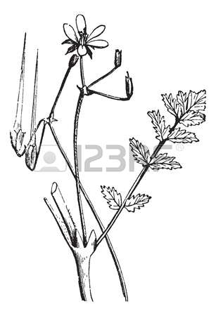 116 Herbology Stock Illustrations, Cliparts And Royalty Free.