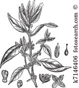 Herbology Clip Art Vector Graphics. 166 herbology EPS clipart.