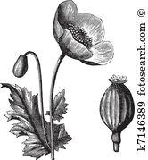 Herbology Clip Art Vector Graphics. 167 herbology EPS clipart.