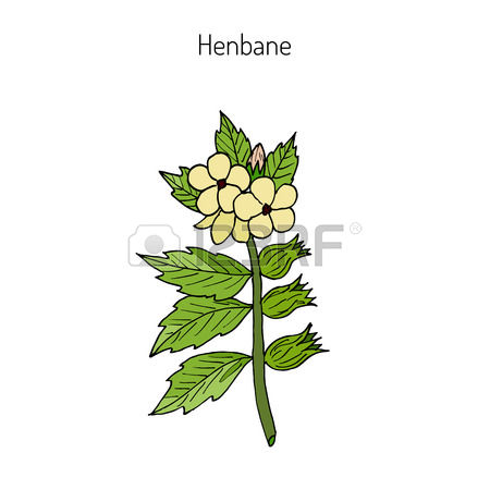 144 Herbology Stock Illustrations, Cliparts And Royalty Free.