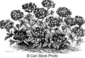 Herbology Vector Clip Art Royalty Free. 167 Herbology clipart.