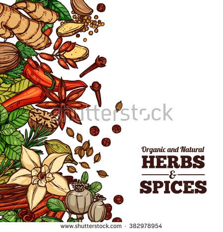 Herbs And Spices Stock Vectors & Vector Clip Art.