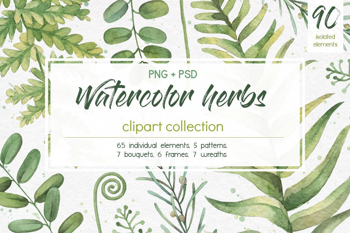 Watercolor herbs. Clipart collection.
