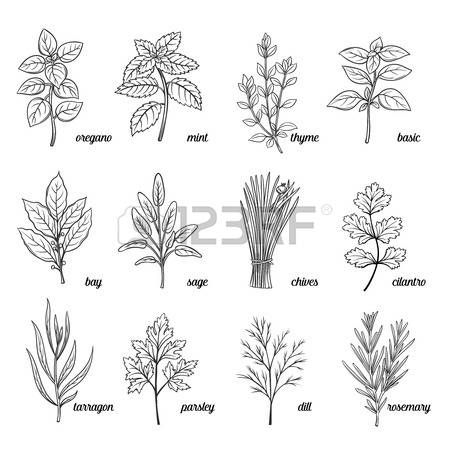 Image result for free vintage black and white clip art mint.
