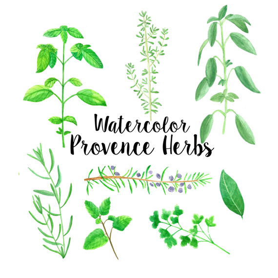 Provence herbs watercolor illustrated clip art by MilisShop.