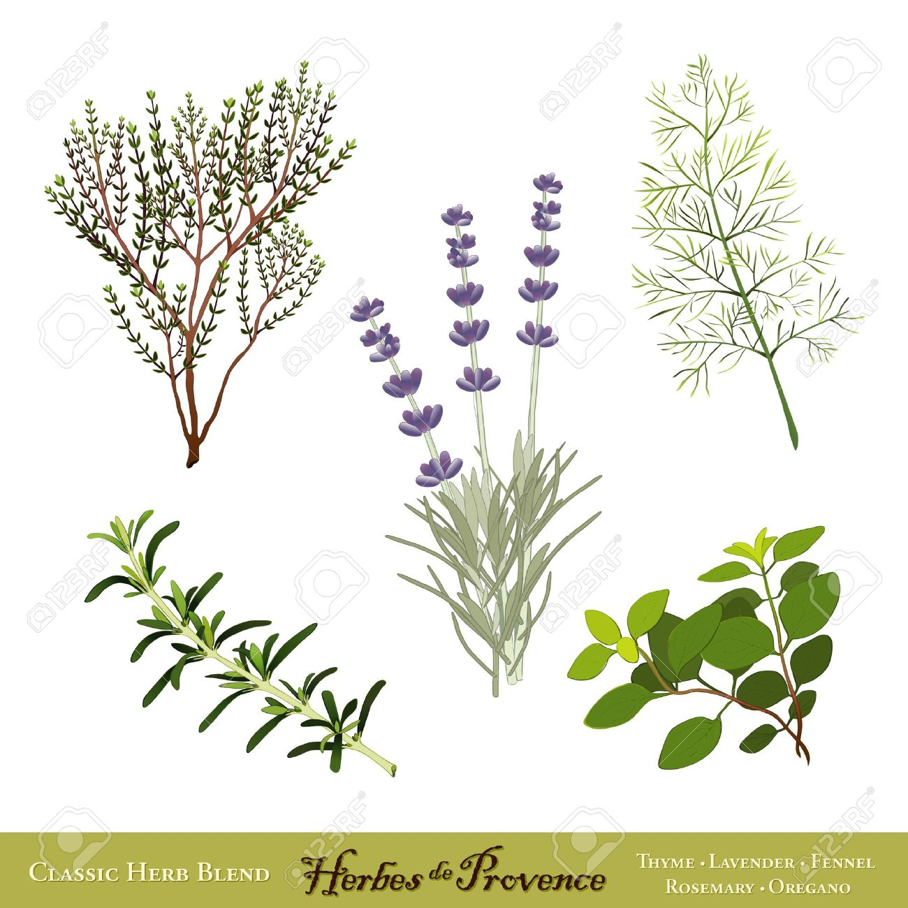 Herbes De Provence, Traditional French Herb Blend Sweet Lavender.