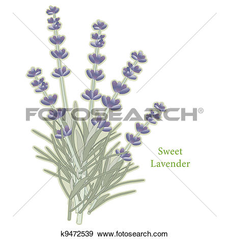 Clip Art of Herbes de Provence, French Herbs k14222576.