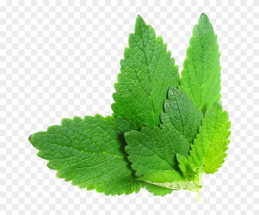Herbs Png File.