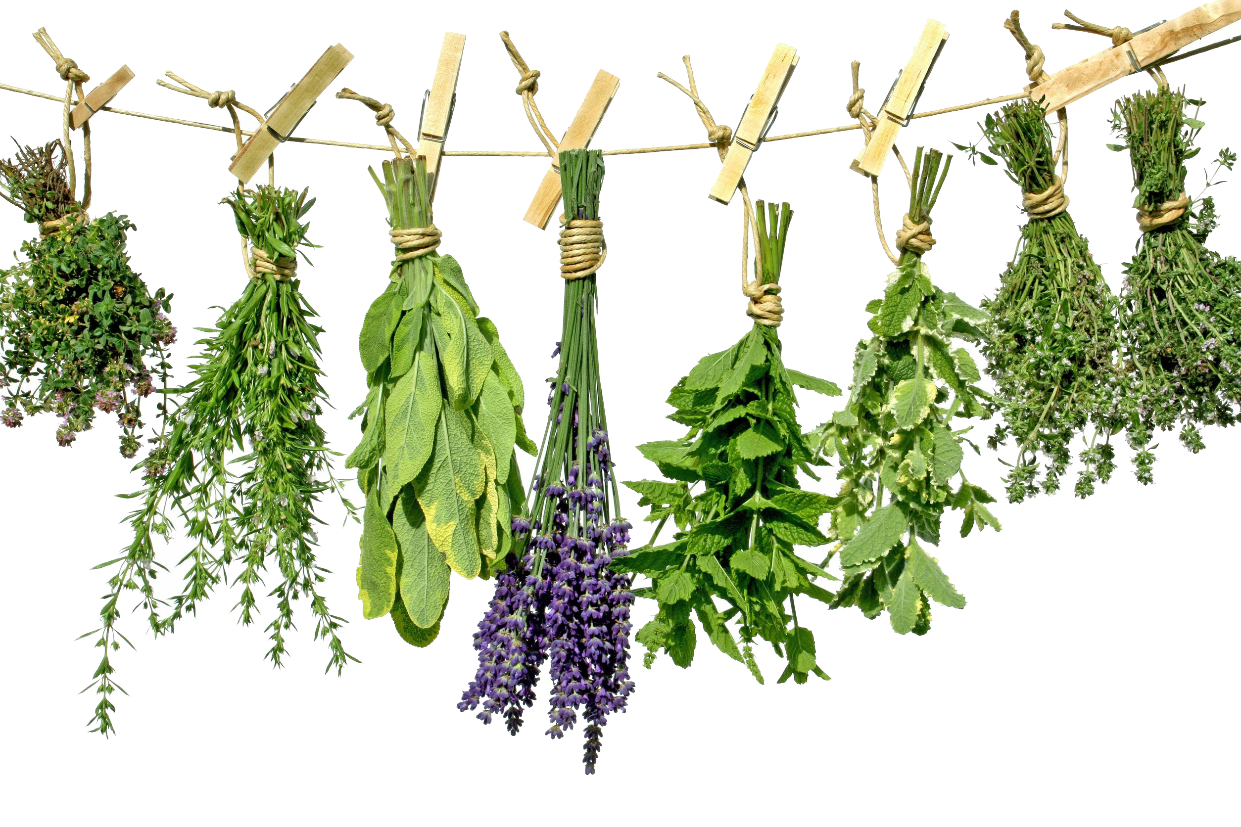 Download Herbs PNG Photo.